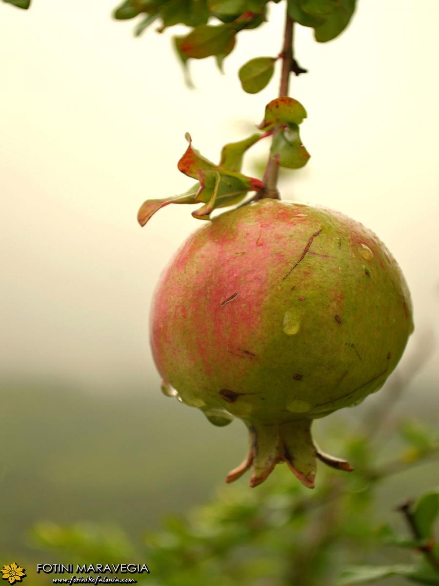 Η βροχερή Αρίστη στα Ζαγοροχώρια