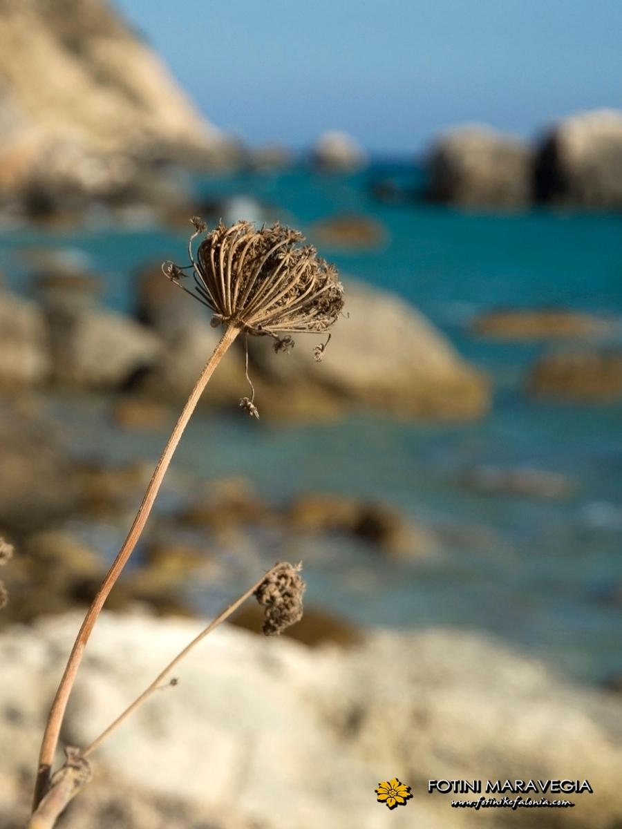 Παραλία Παλιολινός