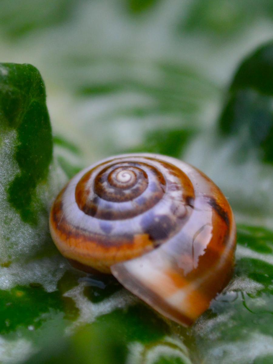 Υπέροχος μικρόκοσμος
